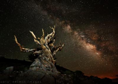 Milky Way xsm5D3_6482_DxO_bristlecone milky way copy