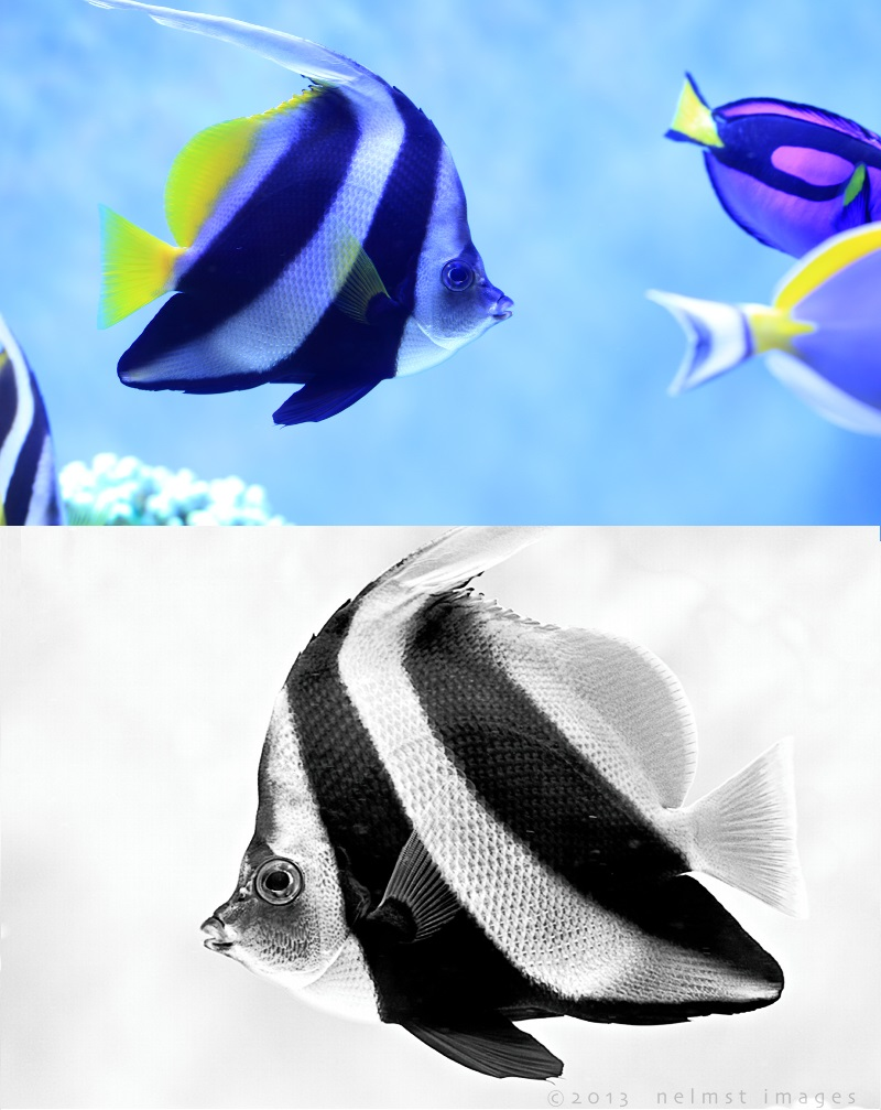 photo editing fish